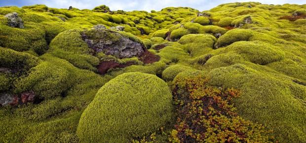 amati-alanamati-iceland-icelandic-lava-field-moss-green-965408jpgd.jpg